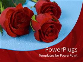 Presentation theme enhanced with three red roses with water rain drops on blue background