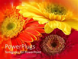 Elegant presentation theme enhanced with three yellow Colored flowers with a blurry orange background