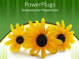 Amazing slides consisting of three yellow flowers on green and white background