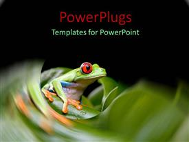 PPT layouts consisting of tiny frog with large red eyes on green stem