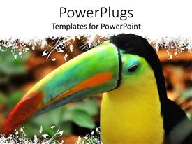 Presentation theme having a tucan enjoying its time with blurred background