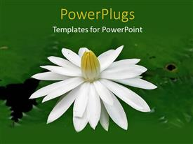 Slide deck consisting of a tulip flower in the lake with a place for text
