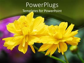 Colorful PPT theme having two beautiful bright yellow colored flowers in a garden