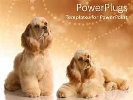 Beautiful presentation design with two big fluffy dogs on a cozy brown background