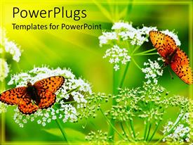 Colorful slide set having two butterflies on two flowers with greenish background
