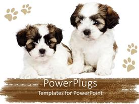 Elegant slides enhanced with two cute puppies showing friendship between them