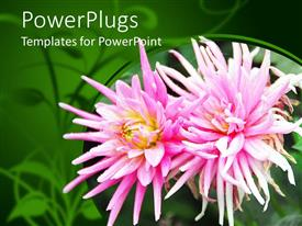 Amazing presentation consisting of two flowers with greenish background and place for text on top