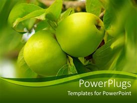 Elegant slide deck enhanced with two green apples on a tree with greenish background