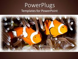 Elegant slide deck enhanced with two orange clown fishes swimming in between tentacles on a brown background