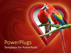 Presentation consisting of two parrots kissing in heart shape, red swirl background, love