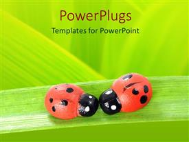 Amazing presentation consisting of two red and black ladybugs on green leaf, green background