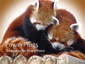 Presentation theme featuring two red pandas snuggling on top of logs