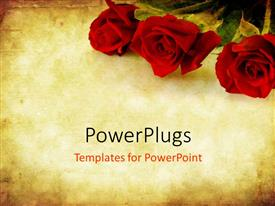 Colorful presentation theme having valentines Day background combining red roses with sandstone and paper grunge textures
