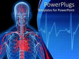Elegant presentation enhanced with visualization of human anatomy in blue with heart and veins in red