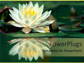 Slide set having water lily reflection on pond lake flower calm mediation zen yoga