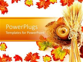 Colorful PPT theme having white background with wheat strands and autumn leaves as border