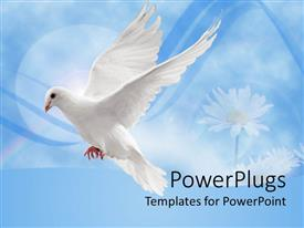 Elegant PPT layouts enhanced with white dove in flight against a blue background with daisies