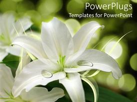 Presentation theme with white flower arrangement, weddings, floral design, florist
