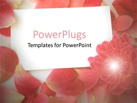 PPT theme featuring white plane blank card surrounded by soft pink petals