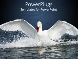 Elegant presentation design enhanced with white swan landing on water with wings outstretched