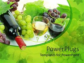 Colorful presentation theme having wine bottle, glass of white wine and glass of red wine, grapes and grape leaves, vines of grapes on white and green background