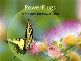 Audience pleasing slides featuring yellow and black butterfly landing on purple flower with green background, insects