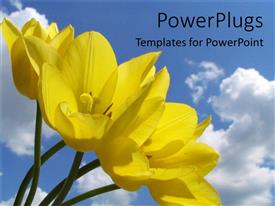 Colorful slide deck having yellow flowers in field blue skies spring time nature environment