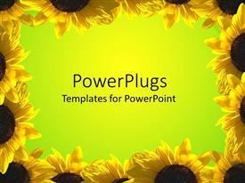 Royalty free PowerPlugs: PowerPoint template - Sunflowers_am_23