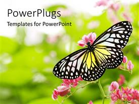 Audience pleasing slide deck featuring yellow, white, black butterfly landing on pink flowers