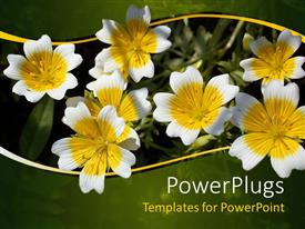 Presentation theme enhanced with yellow and white flowers with green and yellow wave border, nature, spring
