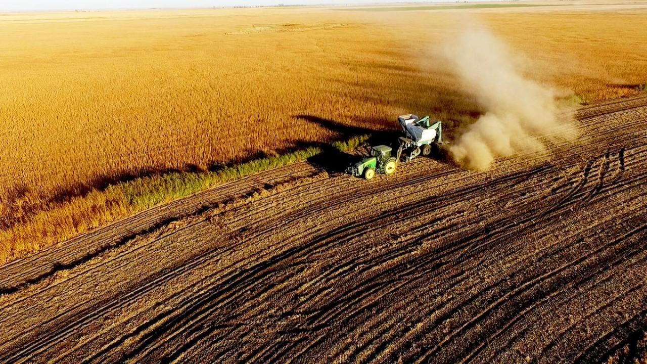 Grain Marketing Outlook