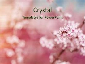 Amazing PPT theme having abstract pink spring background backdrop and a  colored foreground.