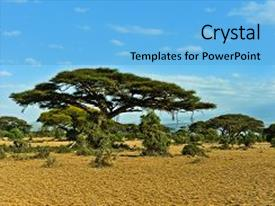 Top savanna powerpoint templates backgrounds slides and ppt themes slides consisting of african acacia savanna in kenya background and a light blue colored foreground toneelgroepblik Choice Image