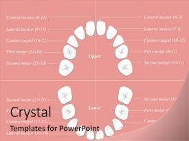 25+ Anatomy Tonsil PowerPoint Templates w/ Anatomy Tonsil-Themed ...