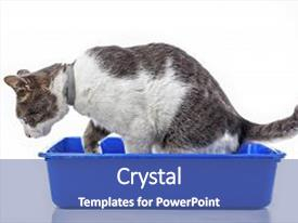 Beautiful presentation theme featuring animal pet cat litter box backdrop and a ocean colored foreground.