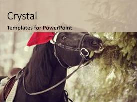 100 animated sport powerpoint templates w animated sport themed ppt layouts enhanced with animated black sports horse in a background and a colored foreground toneelgroepblik Choice Image