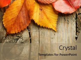 Powerpoint template thanksgiving harvest orange background with colorful ppt theme enhanced with autumn leaves over wooden background backdrop and a coral colored foreground custom template toneelgroepblik Gallery
