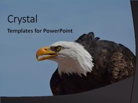 Eagle scout powerpoint templates w eagle scout themed backgrounds colorful presentation theme enhanced with bald eagle scouting from front backdrop and a seafoam green colored maxwellsz
