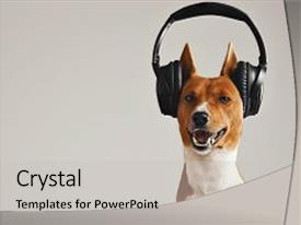 Slide set featuring basenji dog listening to music background and a  colored foreground.