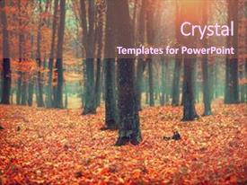 Colorful slide deck enhanced with beautiful autumnal park beauty nature backdrop and a  colored foreground.