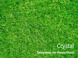 PPT layouts consisting of beautiful grass texture background and a forest green colored foreground