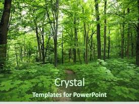 PPT theme having beautiful morning green forest background and a forest green colored foreground