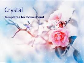 PPT layouts featuring beautiful pink roses and small bird in the snow and frost on a blue and pink background snowing artistic winter natural image selective and soft focus background and a  colored foreground.