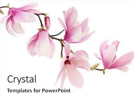 PPT theme with beautiful pink spring magnolia flowers background and a white colored foreground