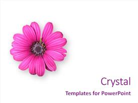 Amazing presentation design having big bright pink flower backdrop and a pink colored foreground.