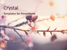 PPT theme with blooming almond tree blossom background and a lemonade colored foreground.