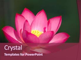 5000 lotus flower powerpoint templates w lotus flower themed