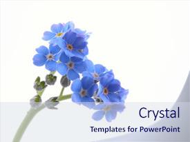 Top Blue Flower Powerpoint Templates Backgrounds Slides And Ppt