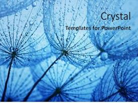 Cool new PPT theme with blue green - dandelion flower with water drops backdrop and a light blue colored foreground
