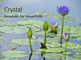 Theme featuring blue water lily and green background and a light gray colored foreground.